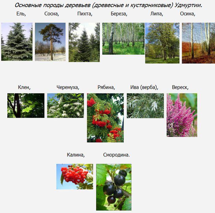 Основные породы деревьев (древесные и кустарниковые) Удмуртии.
