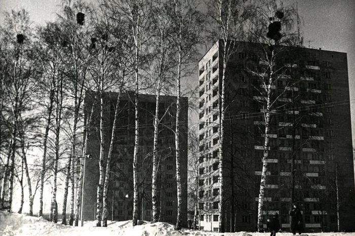 Березы на Центральной площади, 1976 год. Ижевск.