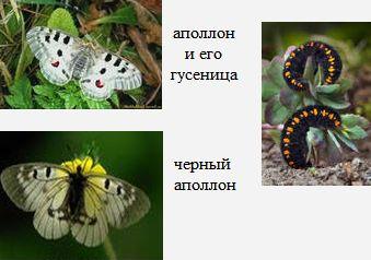 Аполлон. Бабочки Удмуртии.