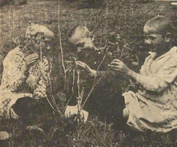 """В огороде Ижевского дошкольного детдома. Фото: из газеты """"Будь готов"""" от 26 мая 1937 года."""