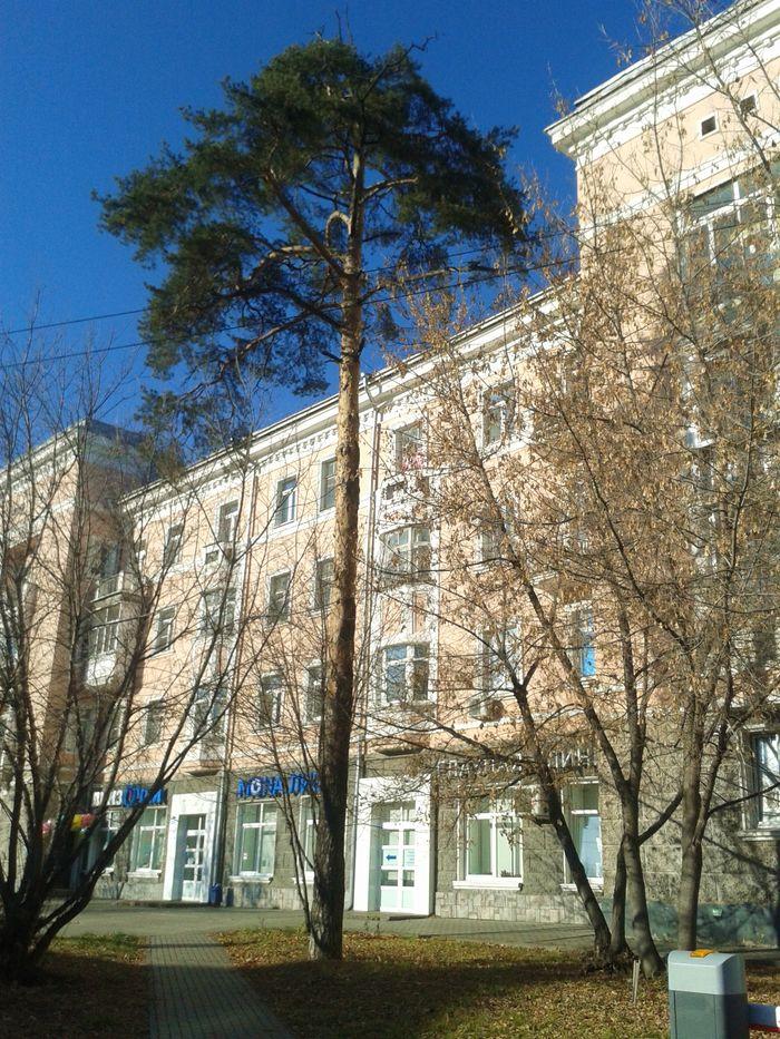 Дом №184 ул. Свободы Ижевска. ДВА. Фото 27.10.2020 13:21.