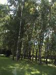 Липово-березовые. Леса Удмуртии.