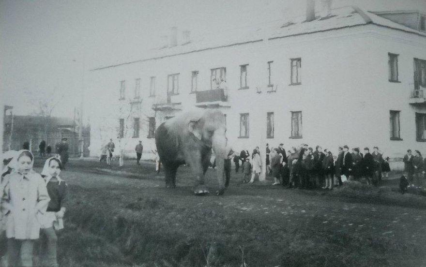 Слон на улицах Глазова. 1971 г.
