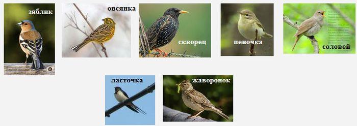 Перелетные птицы Удмуртии - скворцы, зяблики, соловьи, ласточки, жаворонки.