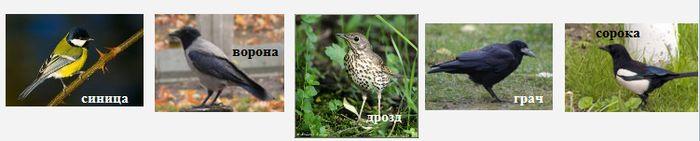 Воробьиные Удмуртии - серая ворона, грач, сорока, синицы, дроздовые.