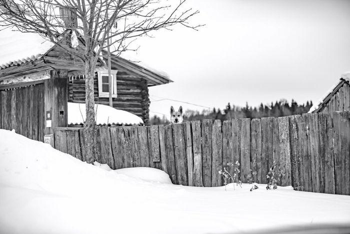 Деревня Липовка. 2019 г. Удмуртия. Воткинский район. Фото: Андрей Захваткин.