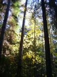 Ельники кленовые. Леса Удмуртии.