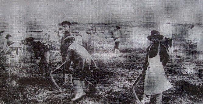 Подростки, работающие по найму. Глазовское земство. 1910-1913 г.