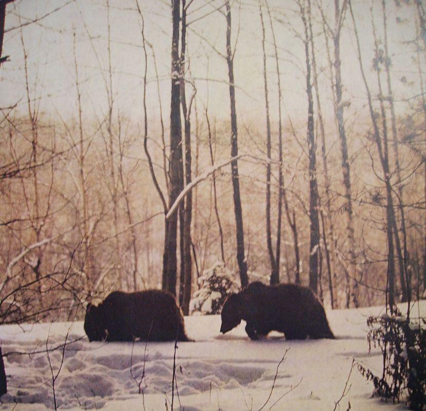 Удмуртия, бурые медведи.