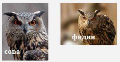Совы Удмуртии (ночные хищники) - филин, сова.