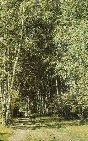 Аллея городского парка, 1976 год. Фотоальбом - Моя Удмуртия. Можга.